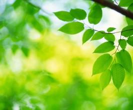 Grøn rengøring